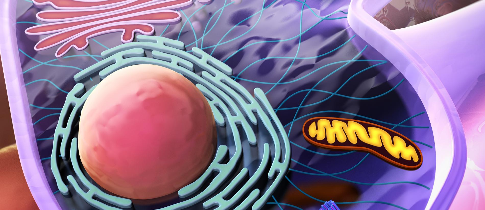 Metabolism in Cancer and Stromal Cells - campaign visual